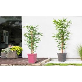 Plante Bambou - 120 et 150cm